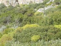 flora ai piedi della falesia - 8 aprile 2012  - Macari (683 clic)
