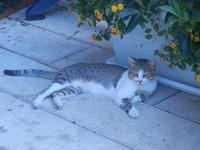 gatto - 7 settembre 2012  - Castellammare del golfo (953 clic)