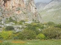 flora ai piedi della falesia e monti dell'entroterra - 8 aprile 2012  - Macari (763 clic)