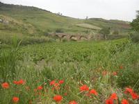 papaveri, campagna e ponte ferroviario - 20 maggio 2012  - Gibellina (787 clic)
