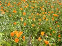 flora ai piedi della falesia - 8 aprile 2012  - Macari (714 clic)