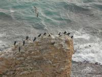 cormorani e gabbiani su scoglio  - 26 febbraio 2012  - Sciacca (1226 clic)
