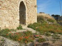 ruderi Castello Eufemio con papaveri - 2 giugno 2012  - Calatafimi segesta (340 clic)