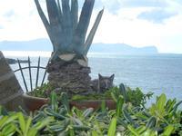 gatto nel vaso con agave e Golfo di Castellammare - 15 aprile 2012  - Terrasini (773 clic)