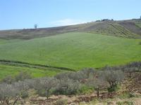 panorama agreste - Baglio Arcudaci - 9 aprile 2012  - Bruca (1006 clic)