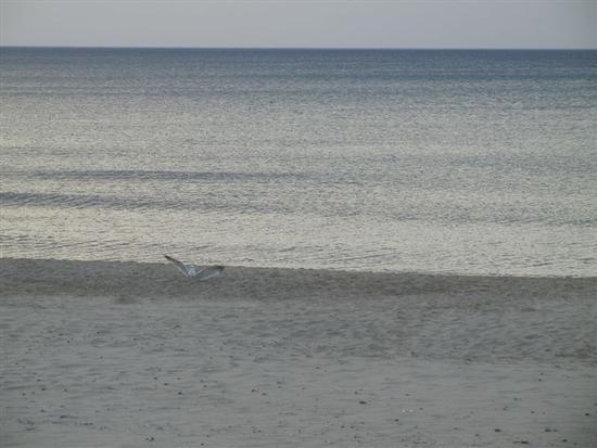 Zona Battigia - gabbiano in riva al mare - ALCAMO MARINA - inserita il 05-Nov-14