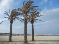 palme in spiaggia - 8 aprile 2012  - San vito lo capo (449 clic)