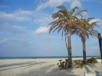 palme in spiaggia - 8 aprile 2012  - San vito lo capo (1734 clic)