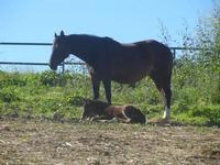 cavallo e puledro - Baglio Arcudaci - 9 aprile 2012  - Bruca (1068 clic)