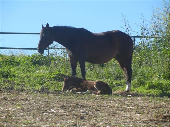 cavallo e puledro - BRUCA - inserita il 17-Jun-14