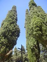Santuario Madonna del Romitello - croce nella pineta - 9 maggio 2012  - Borgetto (882 clic)