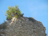 ruderi Castello Eufemio - 2 giugno 2012  - Calatafimi segesta (346 clic)