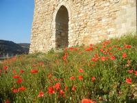 ruderi Castello Eufemio con papaveri - 2 giugno 2012  - Calatafimi segesta (327 clic)