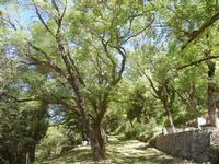 Santuario Madonna del Romitello - pineta - 9 maggio 2012  - Borgetto (1848 clic)