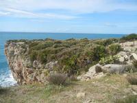 Riserva Naturale Orientata Capo Rama  - 15 aprile 2012  - Terrasini (2026 clic)