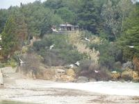 Baia di Guidaloca gabbiani - 11 marzo 2012  - Castellammare del golfo (386 clic)