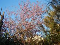 Villa Margherita - alberi - nel giardino pubblico - 9 aprile 2012  - Trapani (1004 clic)