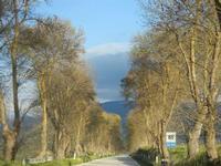 strada alberata  nei pressi del Lago Arancio - 26 febbraio 2012  - Sambuca di sicilia (944 clic)