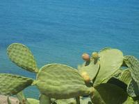 ficodindia e mare - 11 agosto 2012  - Balestrate (773 clic)