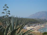agave, pineta e Spiaggia di Ponente - 11 agosto 2012  - Balestrate (1267 clic)