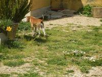 cagnolino - Baglio Arcudaci - 1 aprile 2012  - Bruca (646 clic)