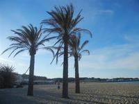 palme sulla spiaggia   - San vito lo capo (730 clic)