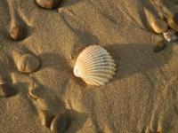 Spiaggia Playa - conchiglia - 18 maggio 2012  - Castellammare del golfo (388 clic)