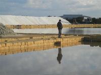 Oasi Naturale Orientata Saline di Trapani e Paceco - 15 gennaio 2012  - Nubia (885 clic)