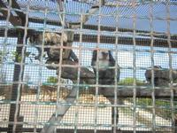BIOPARCO di Sicilia - primati - 17 luglio 2012  - Villagrazia di carini (367 clic)