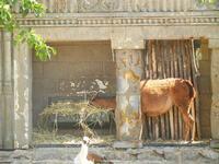 BIOPARCO di Sicilia - Zoo - 17 luglio 2012  - Villagrazia di carini (1062 clic)