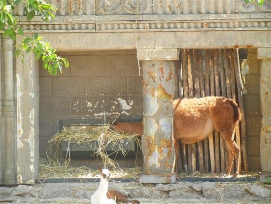 BIOPARCO di Sicilia - Zoo - VILLAGRAZIA DI CARINI - inserita il 27-Apr-15