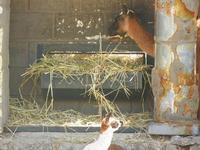 BIOPARCO di Sicilia - Zoo - 17 luglio 2012  - Villagrazia di carini (757 clic)