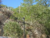 Croce in ferro battuto, nei pressi della Chiesa del SS. Crocifisso - 15 agosto 2012  - Calatafimi segesta (447 clic)