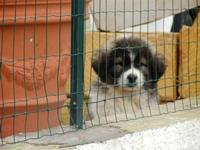 simpatico cucciolo oltre la rete  - 12 febbraio 2012  - Alcamo (414 clic)