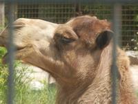 BIOPARCO di Sicilia - Zoo - 17 luglio 2012  - Villagrazia di carini (1269 clic)