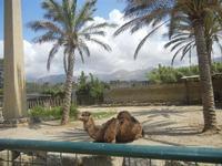 BIOPARCO di Sicilia - Zoo - 17 luglio 2012  - Villagrazia di carini (2713 clic)