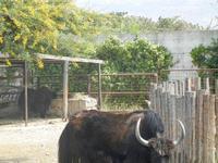 BIOPARCO di Sicilia - fattoria - 17 luglio 2012  - Villagrazia di carini (2872 clic)