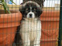 simpatico cucciolo oltre la rete  - 12 febbraio 2012  - Alcamo (581 clic)