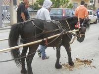SPERONE - sfilata di cavalli - festa San Giuseppe Lavoratore - 29 aprile 2012  - Custonaci (455 clic)