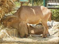 BIOPARCO di Sicilia - fattoria - 17 luglio 2012  - Villagrazia di carini (597 clic)