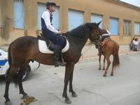 SPERONE - sfilata di cavalli - festa San Giuseppe Lavoratore - 29 aprile 2012  - Custonaci (479 clic)