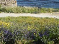 panorama dal Belvedere - prato sul mare - 1 maggio 2012  - Marinella di selinunte (546 clic)