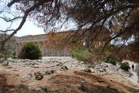 il tempio - 5 agosto 2012 - Foto di Nicolò Pecoraro  - Segesta (879 clic)
