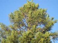 cima d'albero - 9 agosto 2012  - Alcamo (264 clic)
