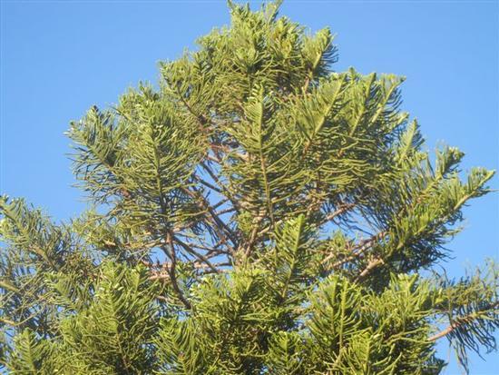cima d'albero - ALCAMO - inserita il 03-Aug-15
