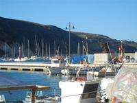 al porto - 26 gennaio 2012   - Castellammare del golfo (752 clic)