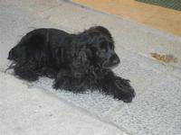 cane nero - 12 febbraio 2012  - Trapani (977 clic)
