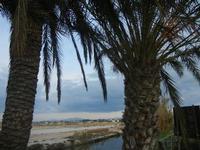 palme all'Imbarcadero Storico per l'Isola di Mozia - 29 gennaio 2012  - Marsala (475 clic)