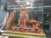 coralli in vetrina - 12 febbraio 2012  - Trapani (729 clic)