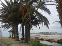 palme al'Imbarcadero Storico per l'Isola di Mozia - 29 gennaio 2012  - Marsala (832 clic)
